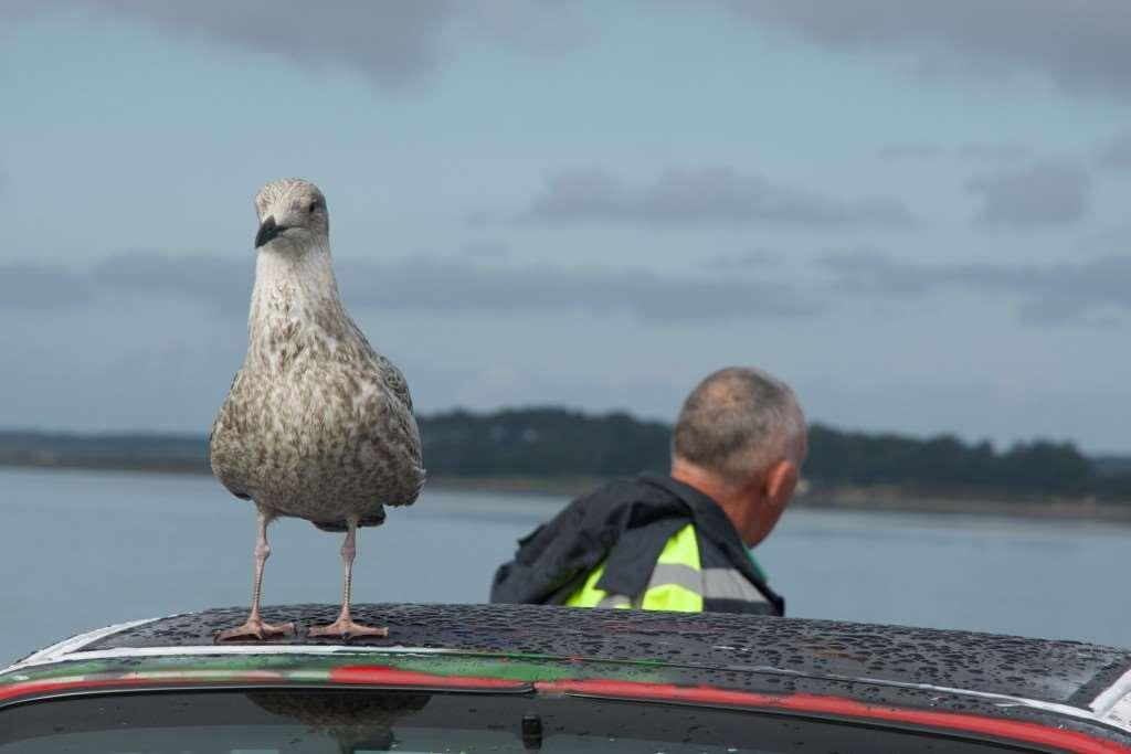 MY SUNDAY PHOTO - Seagull, 0FG 0505 Version 2 1024x683%, uncategorised%
