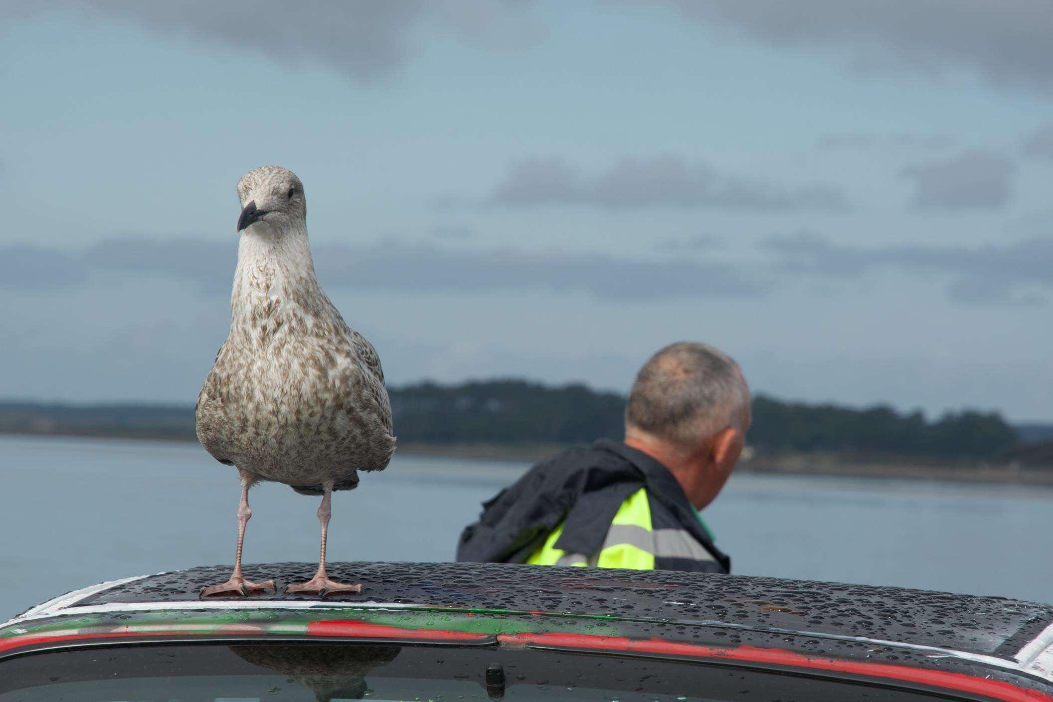 MY SUNDAY PHOTO - Seagull, 0FG 0505 Version 2%, uncategorised%