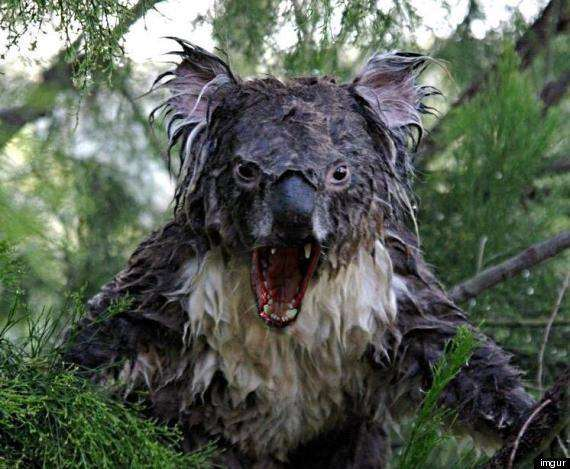 Are your children REALLY safe online? #innocentsearches, o WET KOALA PHOTOSHOP 570%, uncategorised%