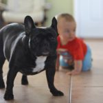 Keeping Your Baby Safe and Snuggly This Winter, French Bulldog and toddler 150x150%, health%