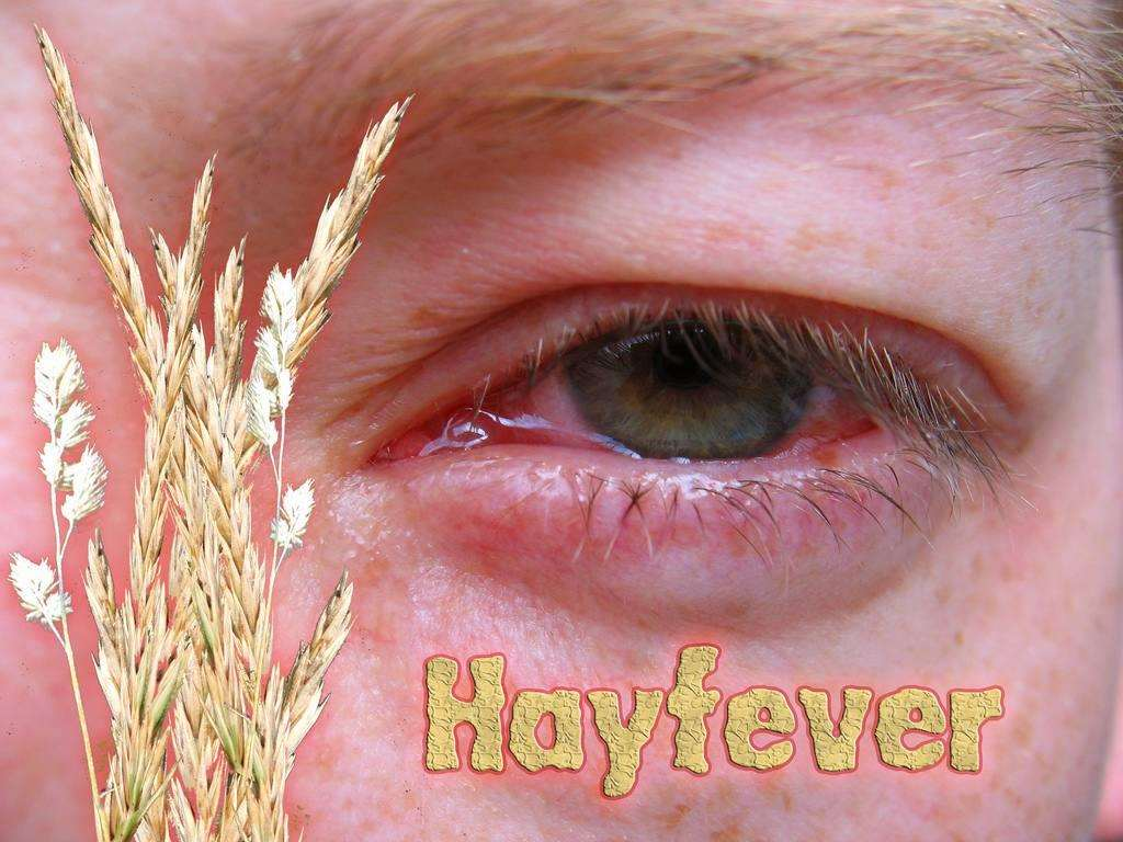 10 Tips to Tackle your Children's Hayfever, 2595424945 152d851e4b b 1%, health, 6-9%