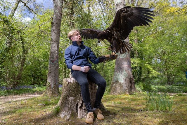 'Awe-inspiring' white-tailed sea eagle arrives on Isle of Wight, 2.59722197%, daily-dad%