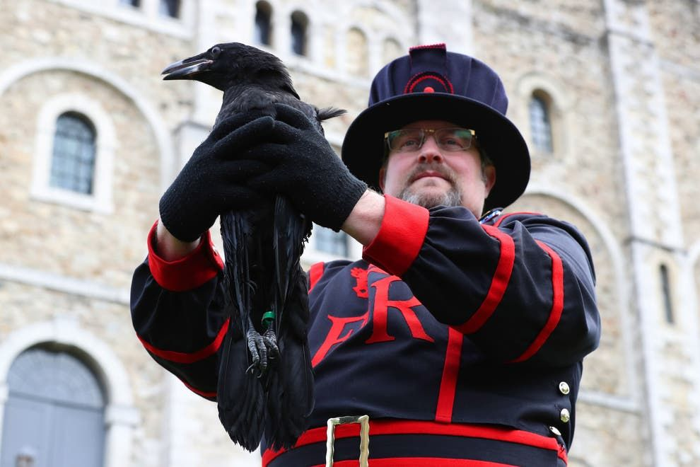 Results of public vote to name Tower of London's baby raven announced, Results of public vote to name Tower of Londons baby raven announced%, daily-dad, community%